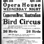 Come one, come all to the Bird Circus...